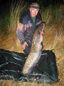 38lb_catfish_from_daiwa_man.jpg_cap